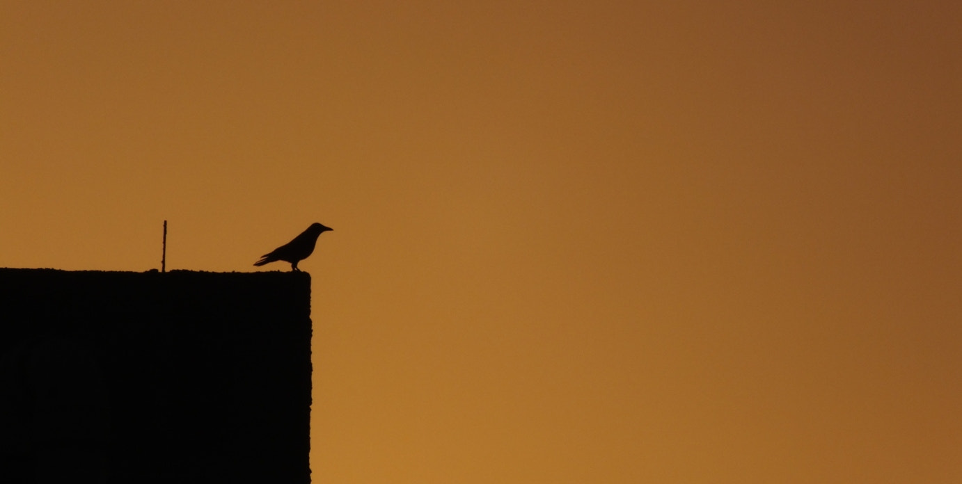 Photograph Bird and Sunset by Ehsan  Sadri on 500px