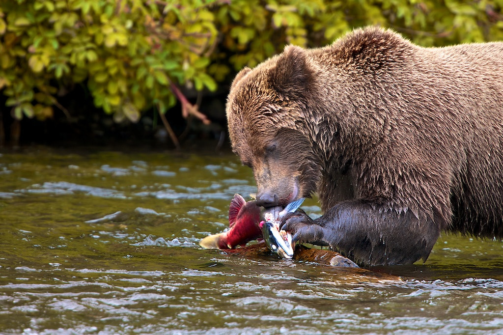 Photograph Salmon Fishing II by Buck Shreck on 500px