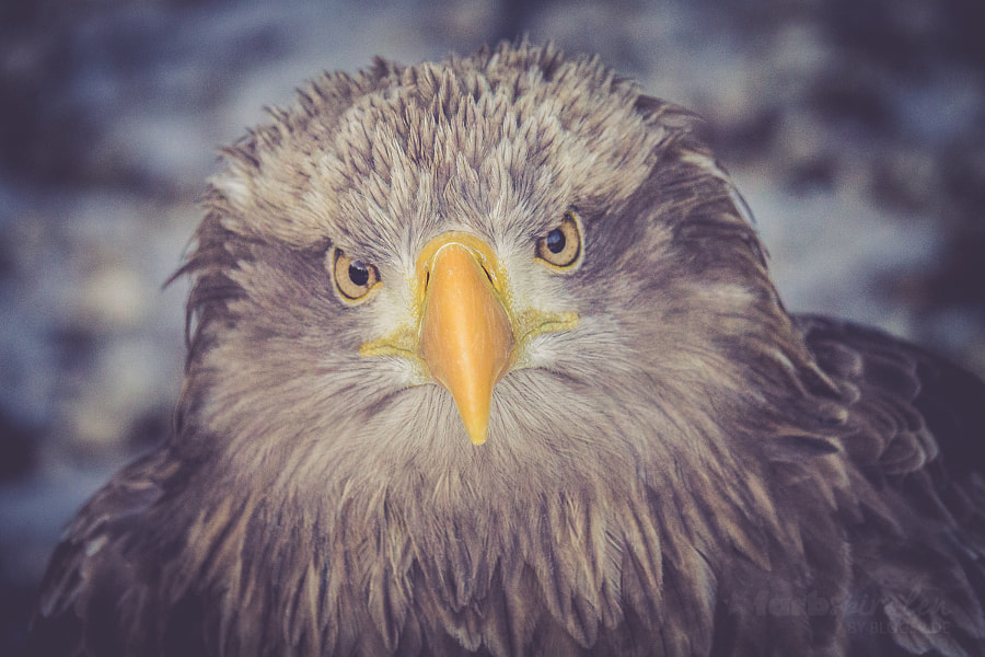 Adler. I see you.