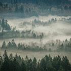 Misty Morn'