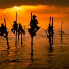 Traditional Sri Lankan stick-fishermen at the sunset