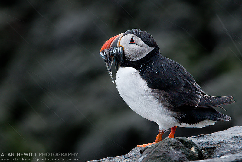 Photograph In The Rain by Project Puffin on 500px