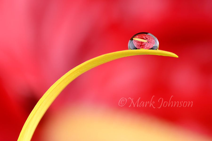 Photograph Anthurium by Mark Johnson on 500px