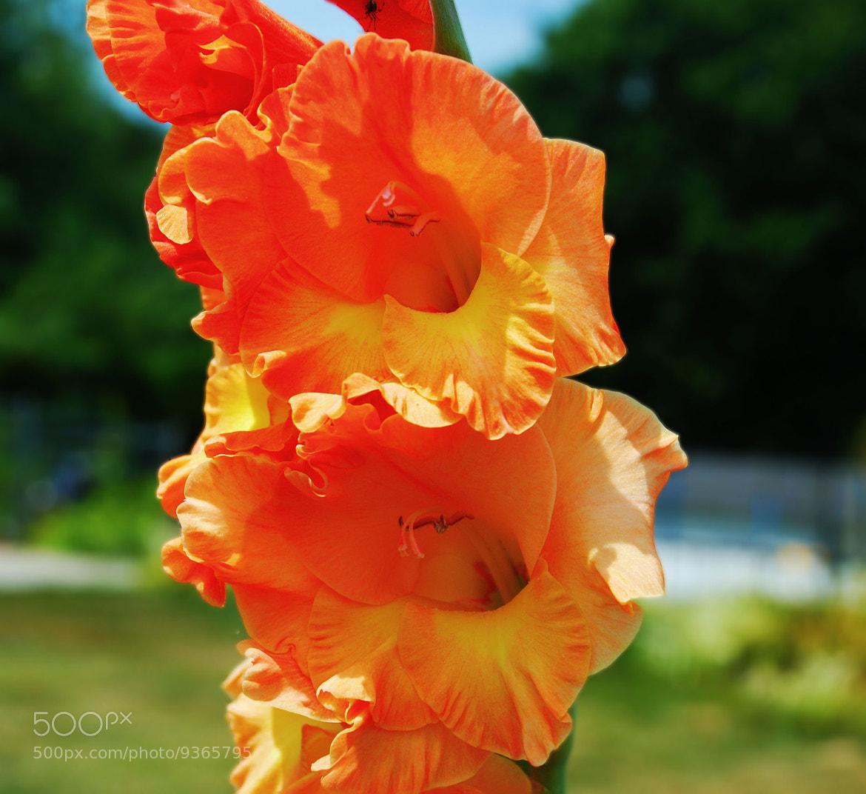 Photograph Bright Orange by Jennifer Williams on 500px