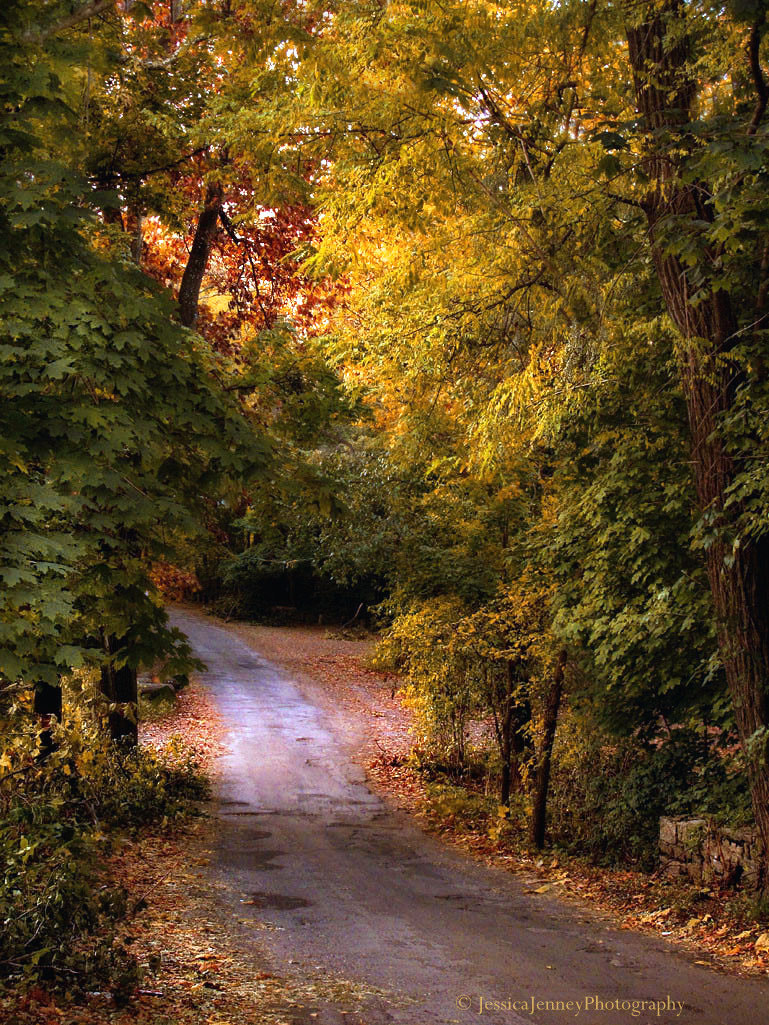 Photograph Back Road by Jessica Jenney on 500px