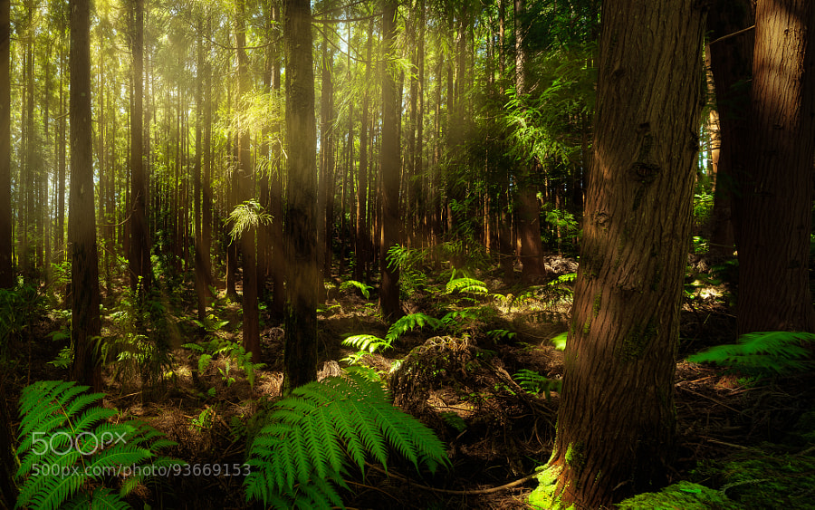 Enchanting forest #1