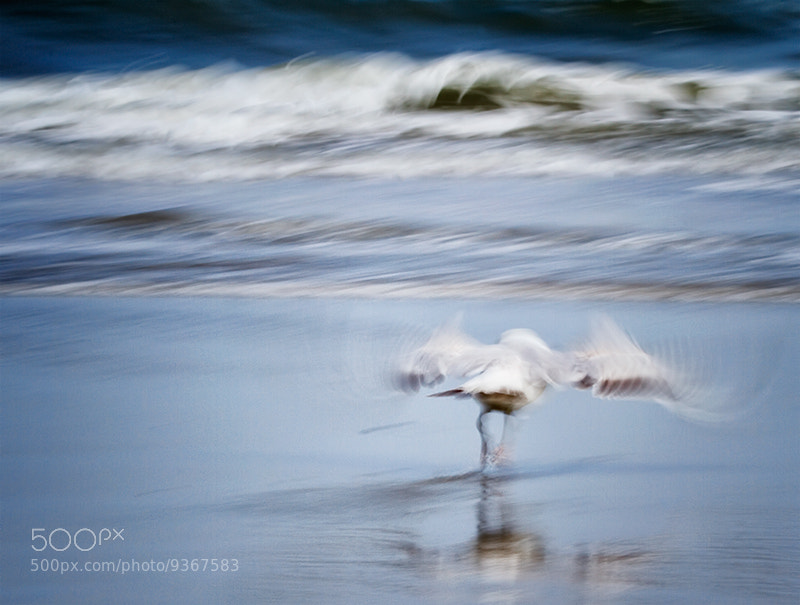 Photograph First Flight by wendy  on 500px