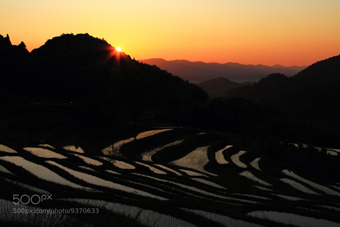 Photograph 美しき始まり Dawn of a rice field by TOS1963 on 500px