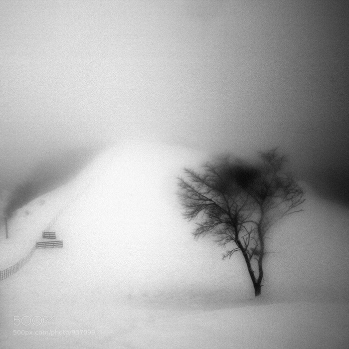 Photograph A Day in Snowy Lands #10 by Namdon Kim on 500px