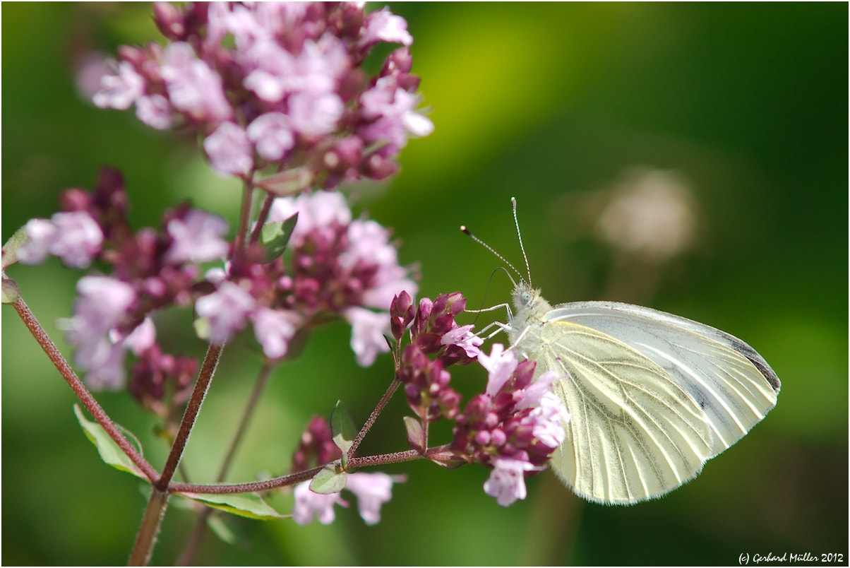 Photograph Close-up of a large white by Gerhard Müller on 500px