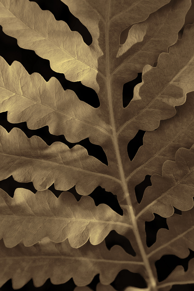 Photograph Fern by Serge Gagné on 500px