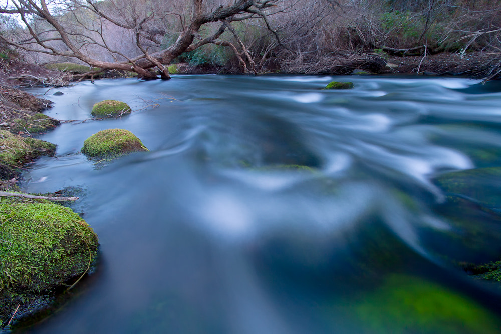 Photograph Putah Creek by Kevin English on 500px