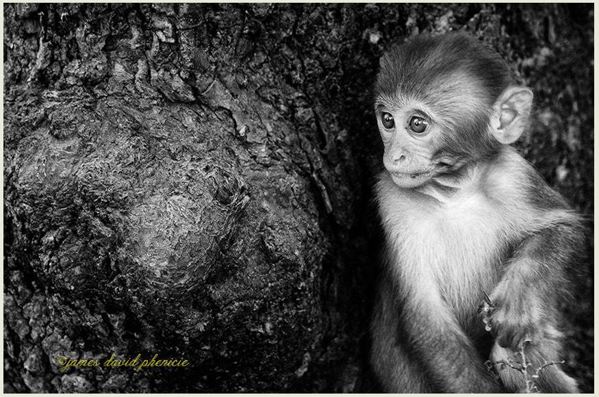 Nepal Series:  Temple Monkey