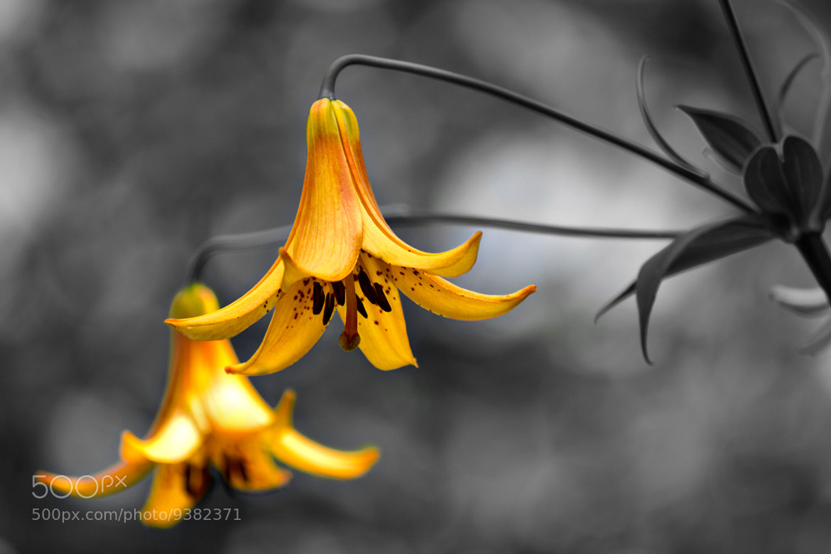 Photograph Bells by Jag Canape on 500px