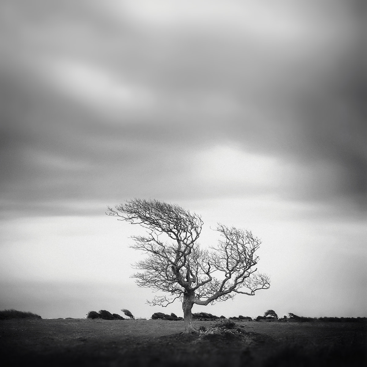 Photograph Tree 9 by Andy Lee on 500px