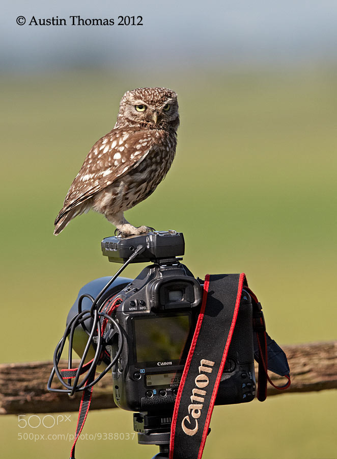 Photograph 9 out of 10 Owls prefer Canon... by Austin Thomas on 500px