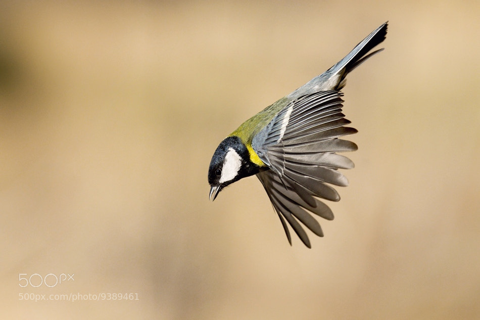 Photograph Master of flying by Milan Krasula on 500px