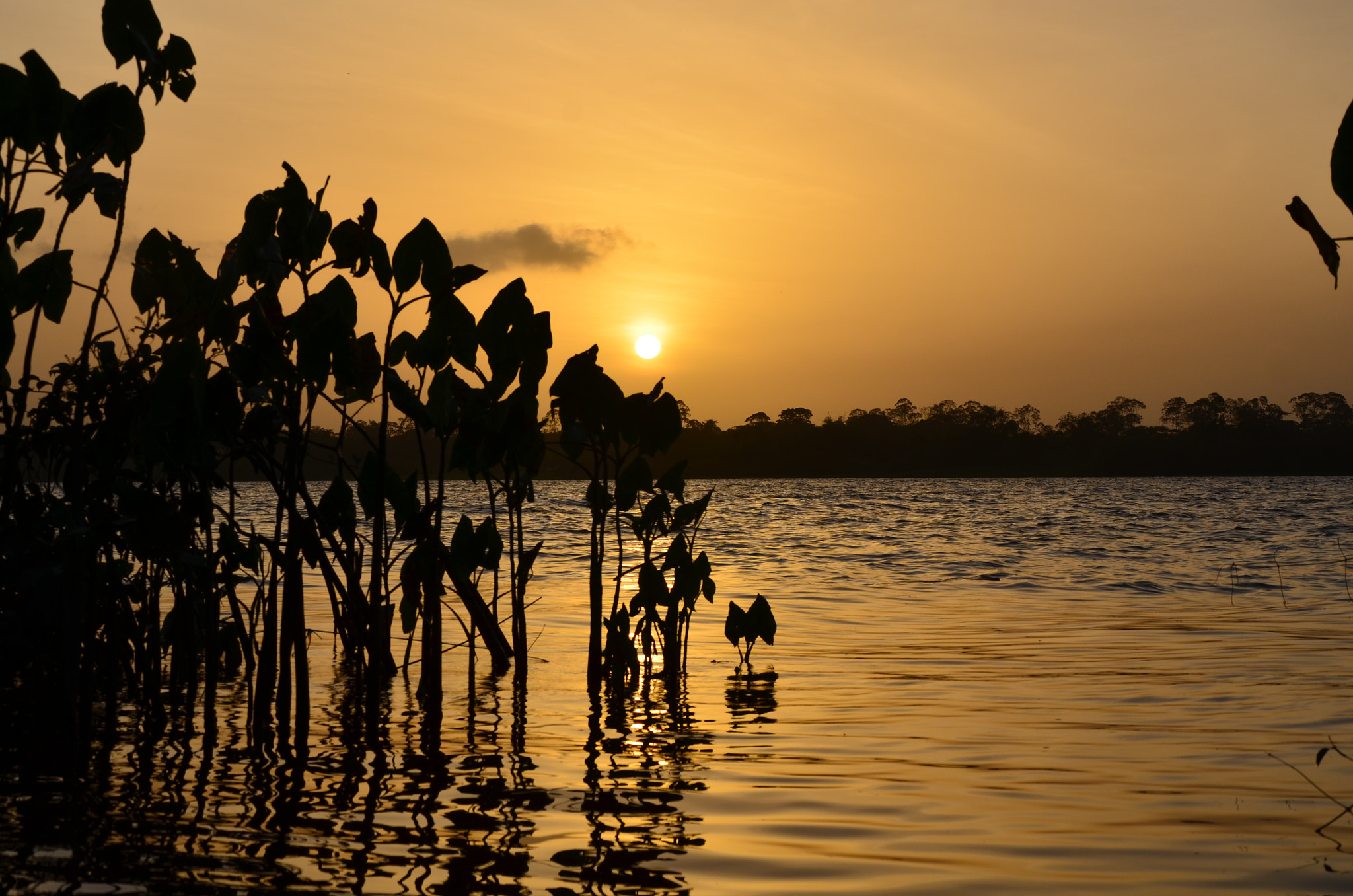Photograph Demerara by James Deeges on 500px