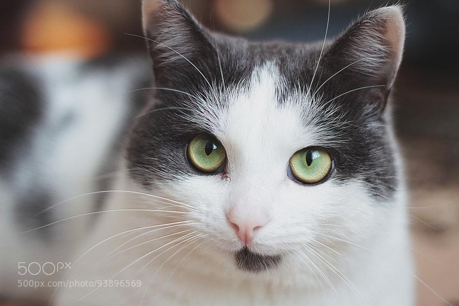 Photograph Cat by Ксения Давыдова on 500px