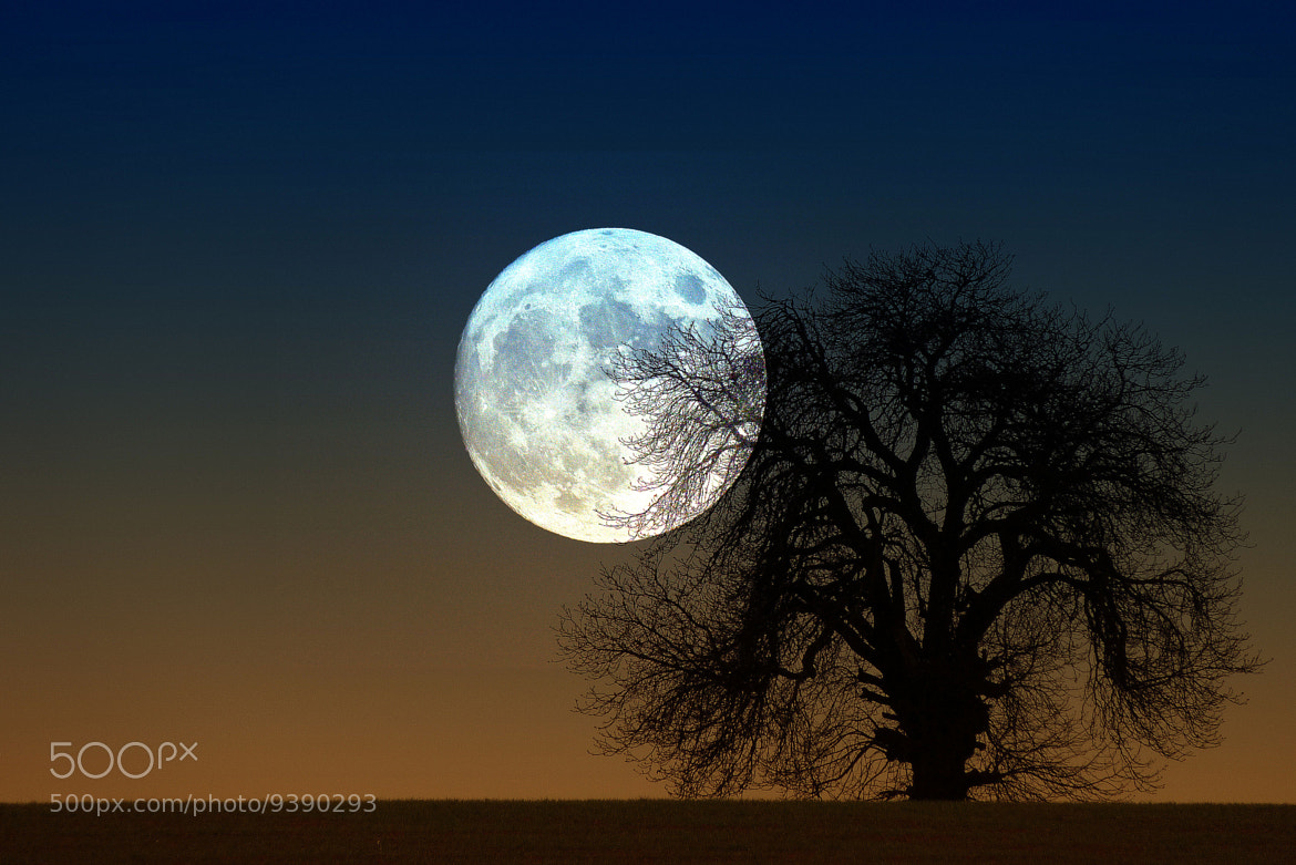 Photograph Moon Rise by Steve Adams on 500px