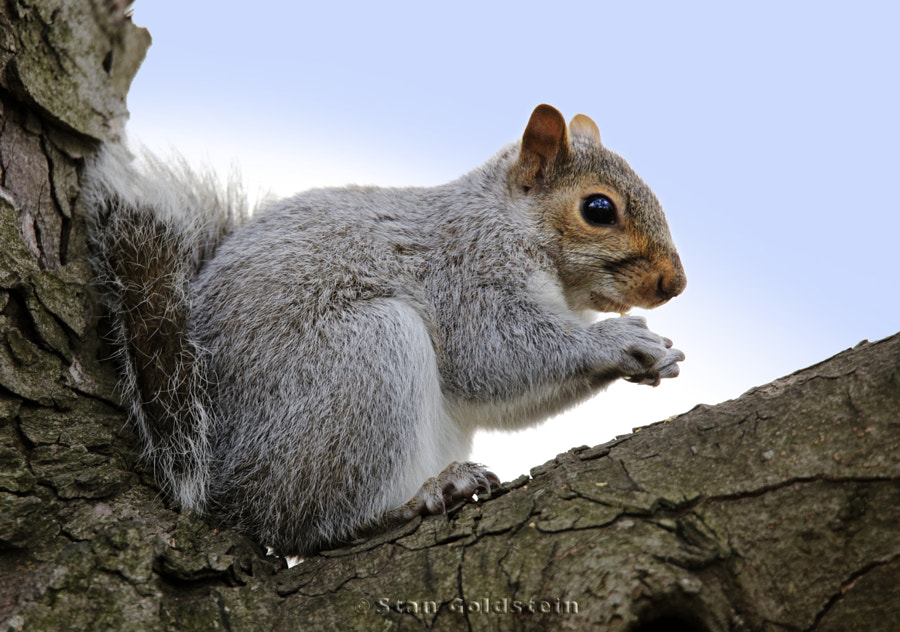 Squirrel sitting in a tree