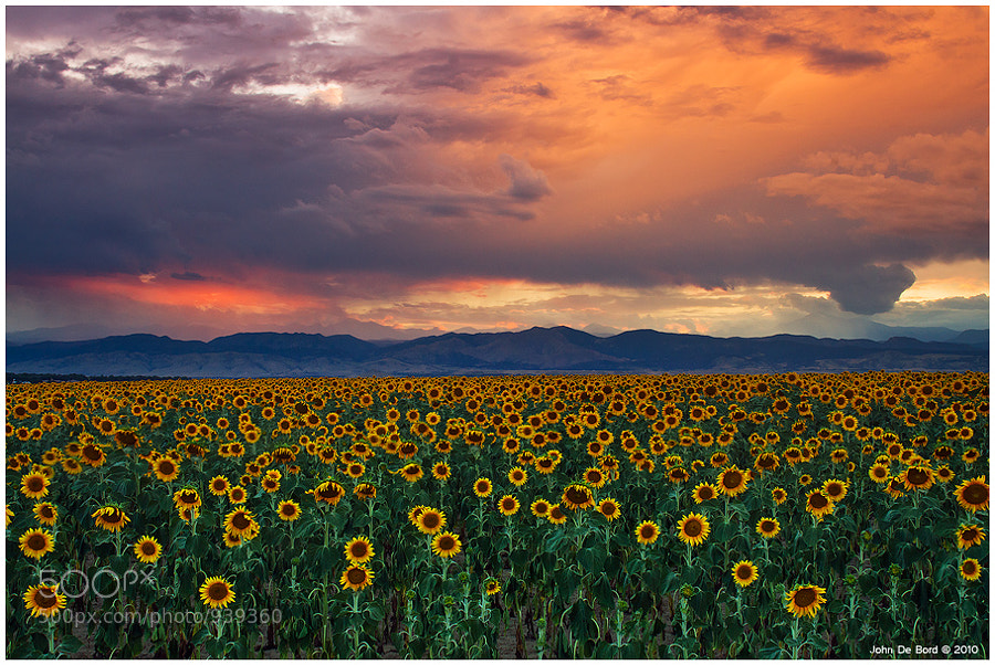 Photograph Gods Sunflower Sky by John De Bord Photography on 500px