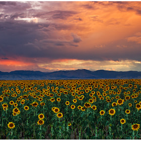 Gods Sunflower Sky by John De Bord Photography (jdebordphoto)) on 500px.com