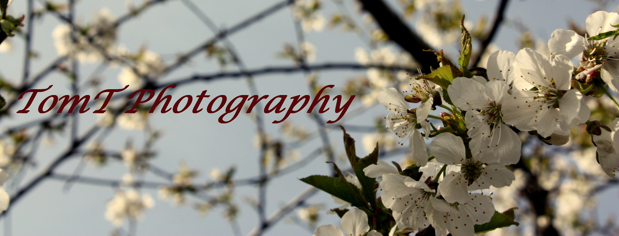 Photograph Promo Photograph For My Page (April) by Tom Toth on 500px