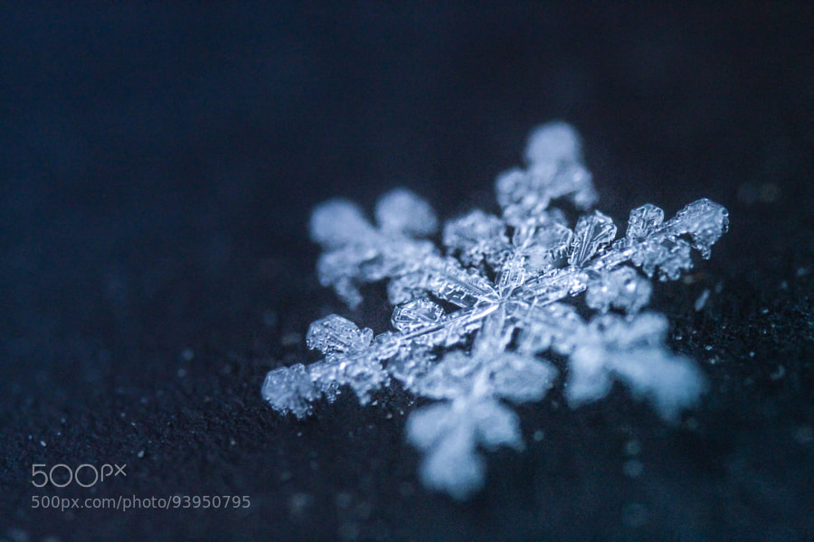 Photograph snowflake by Anna  on 500px