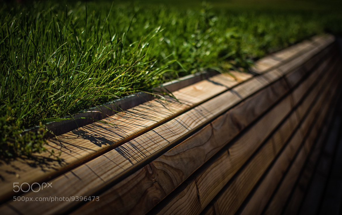 Photograph Gras & Wood by Laurent Meister on 500px