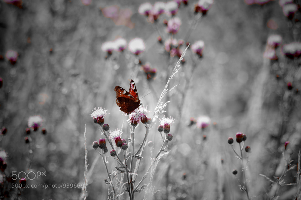 Photograph Butterfly. by Mehdi-andréa Lemanceau on 500px