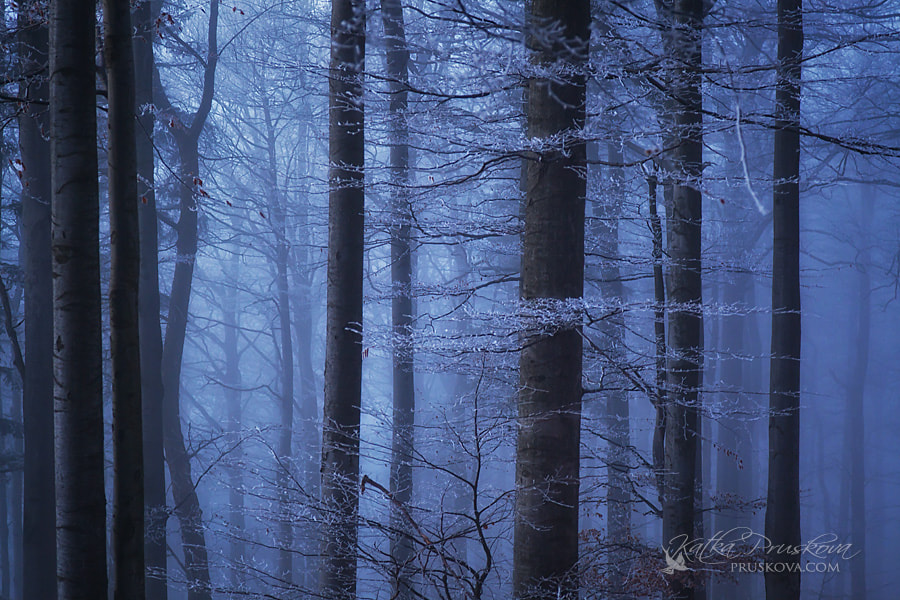 Photograph Misty Forest by Katka Pruskova on 500px