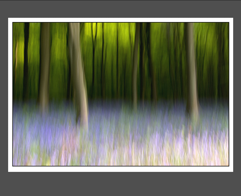 Photograph Bluebell woods 1 by Tony Flashman on 500px