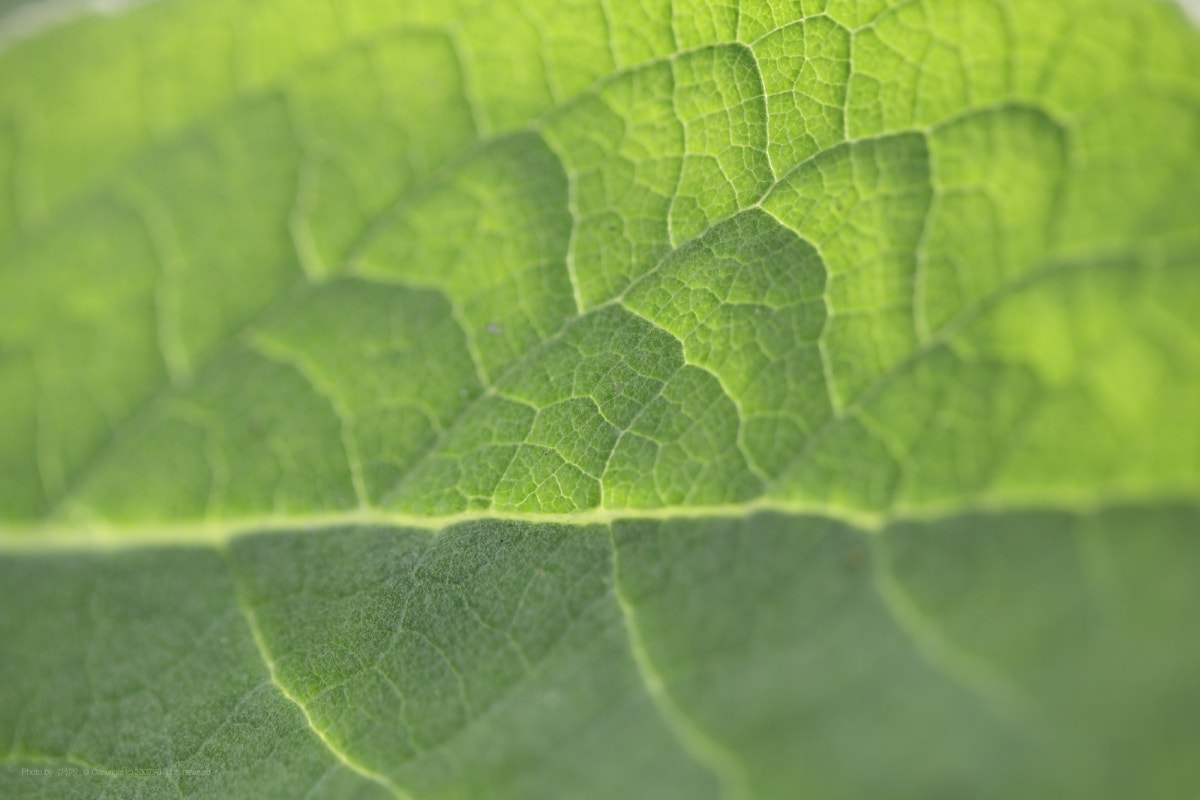 Photograph leaves by KIM DONGYOUNG on 500px