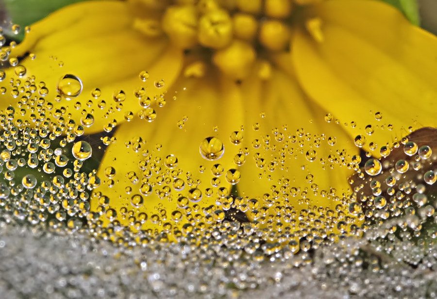 Photograph Beautiful yellow in dews.... by Citra Hernadi on 500px