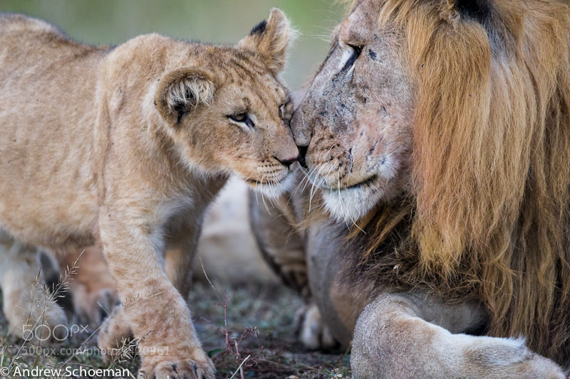 Photograph I Love my Dad by Andrew Schoeman on 500px