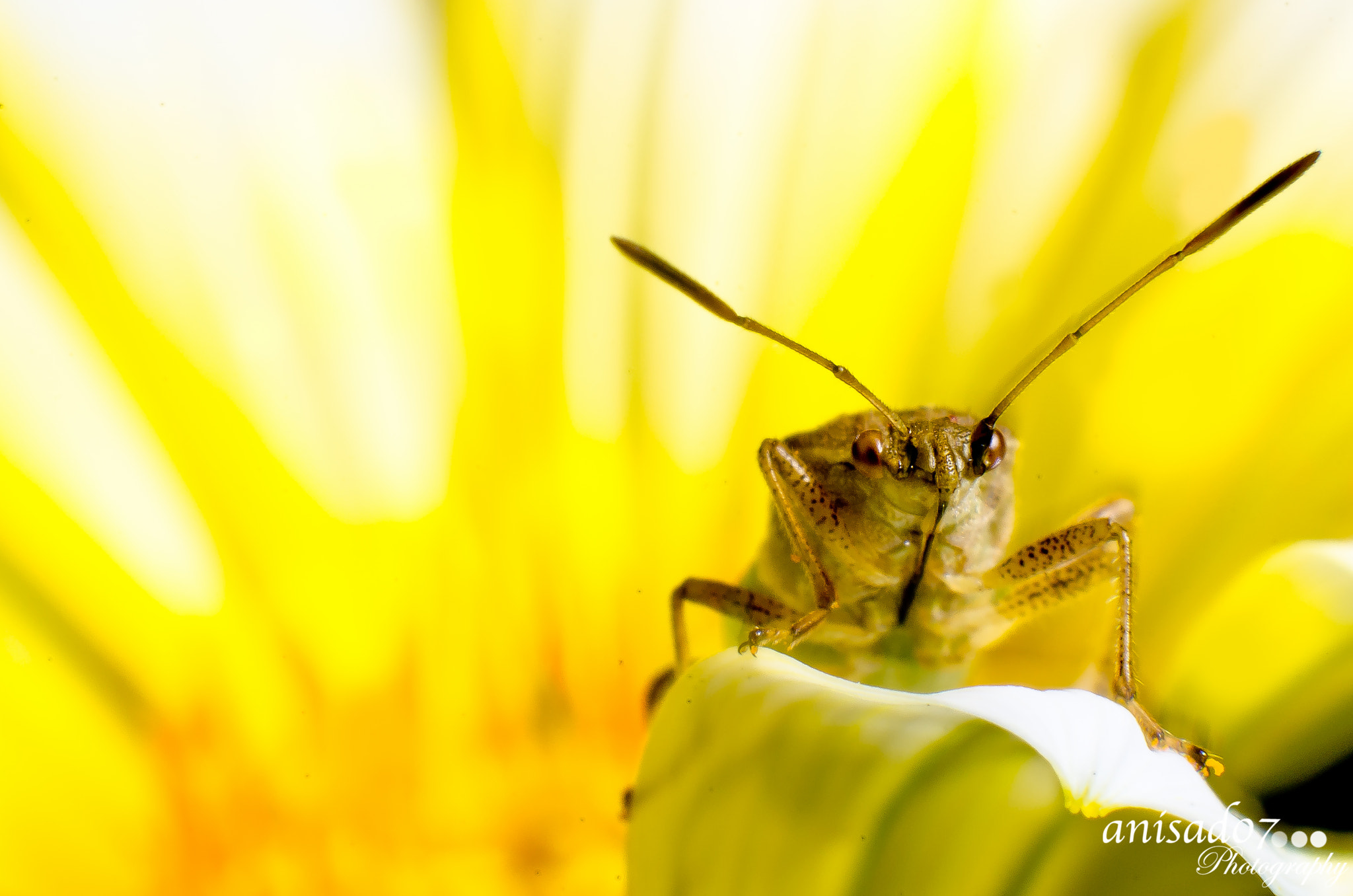 Photograph Insect ANTENNA  by Anish Adhikari on 500px
