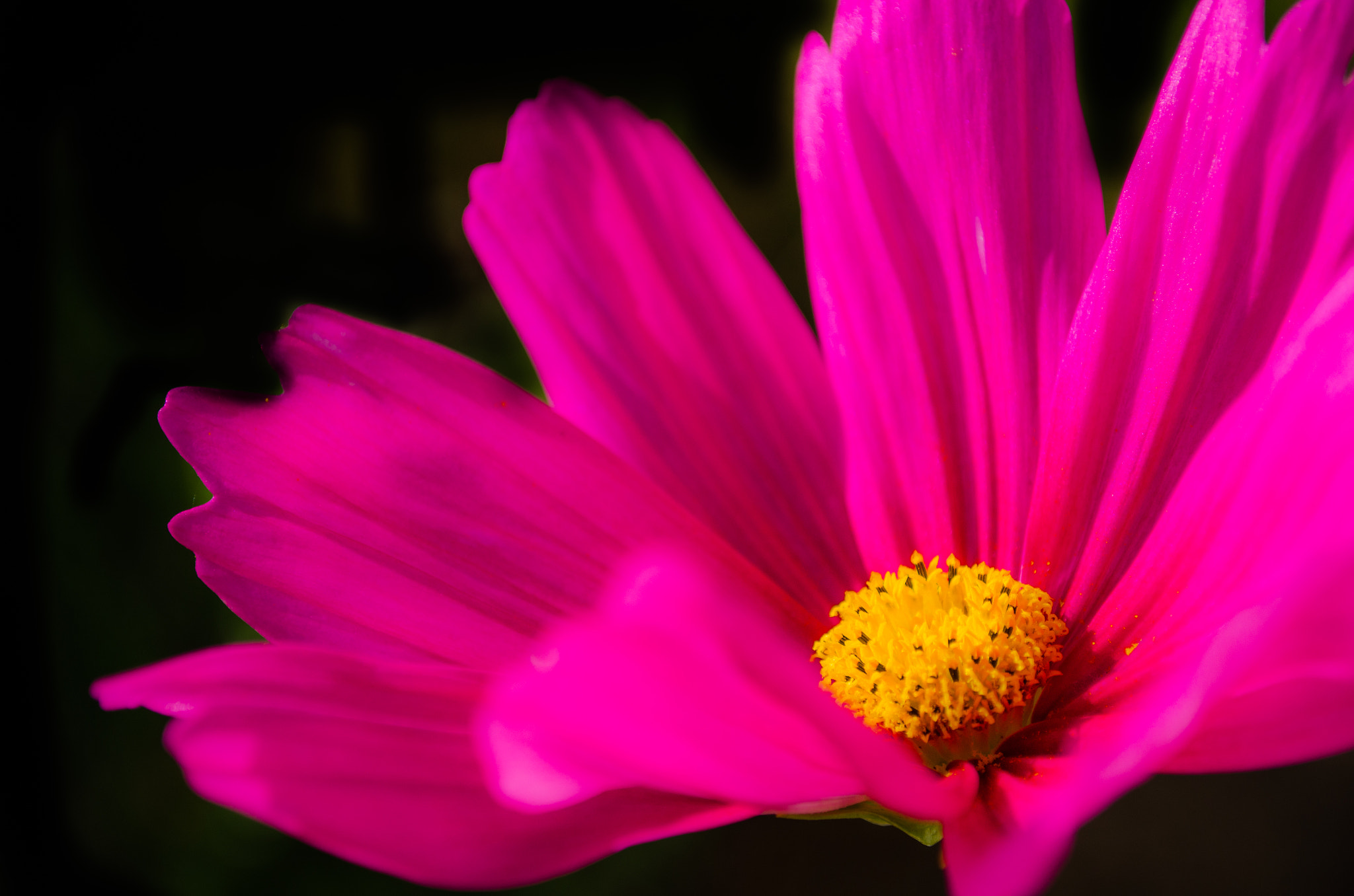 Photograph purple blooming II by van Kyrus on 500px