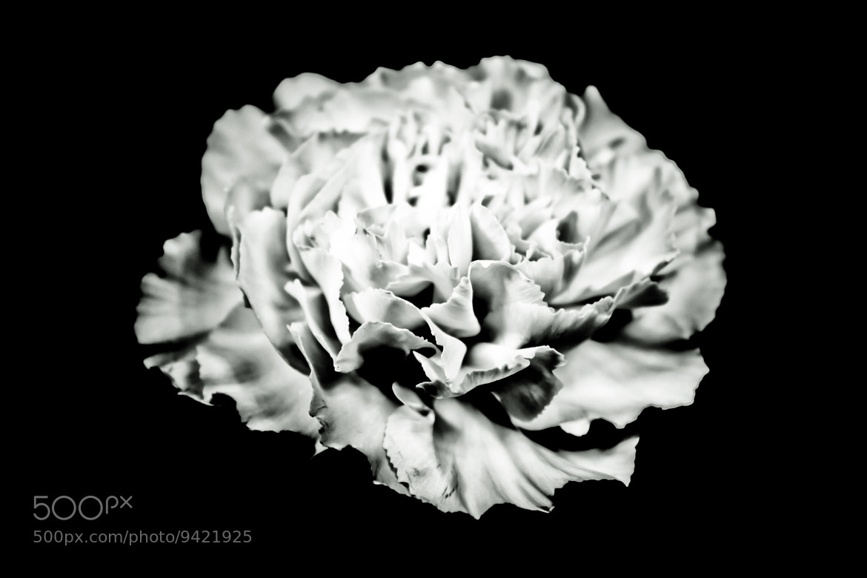 Photograph IR Flower by Sabih Usman on 500px