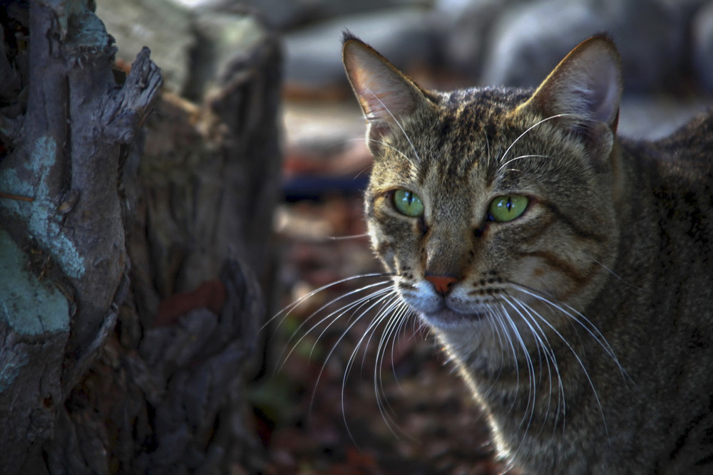 Photograph cat by Nora Almansoori on 500px