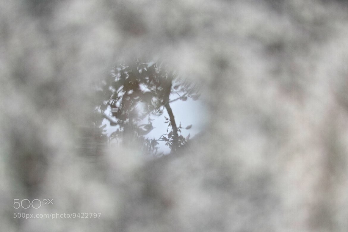 Photograph Puddle by marbee .info on 500px