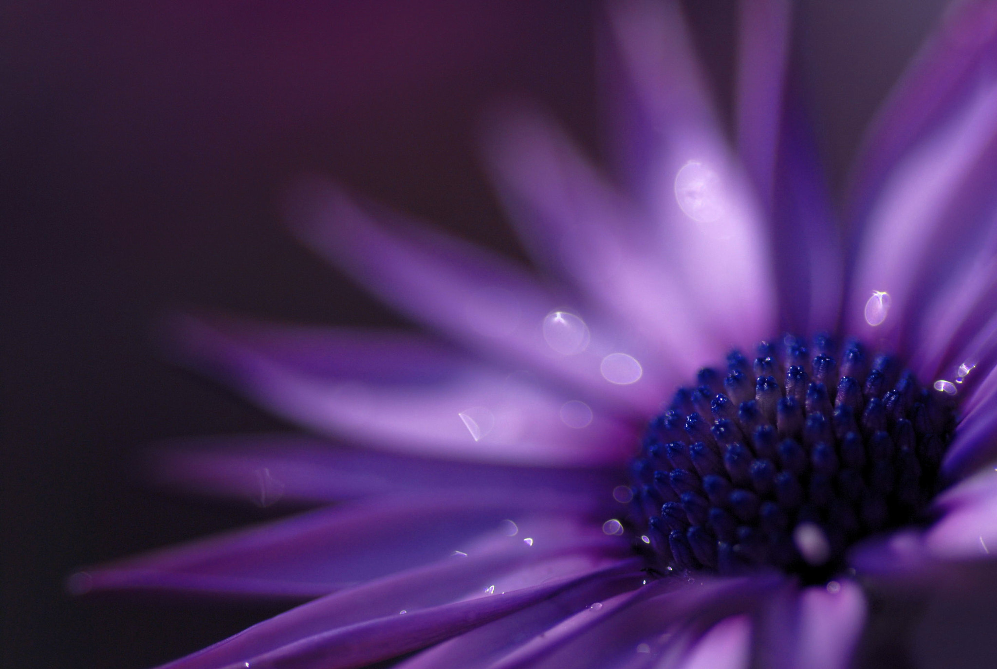Photograph Purple imagery by Lafugue Logos   on 500px