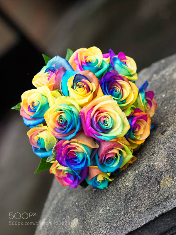 Rainbow roses with petals in every colour of the rainbow for Different color roses bouquet