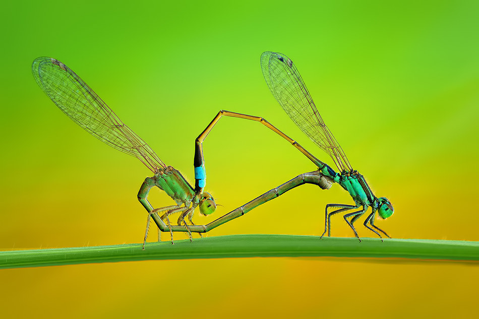 Photograph Made For Each Other by Danniel Partogi on 500px