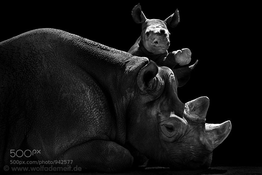 11 rhino and baby