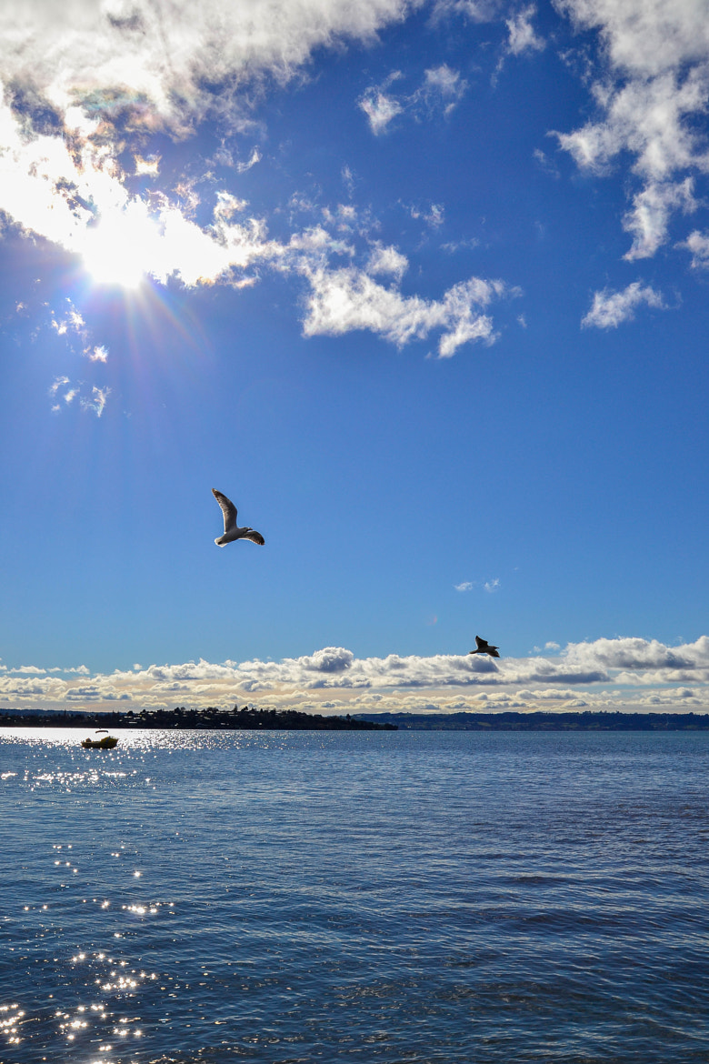 Photograph Sunny Day in Rotorua by Farred Burn on 500px