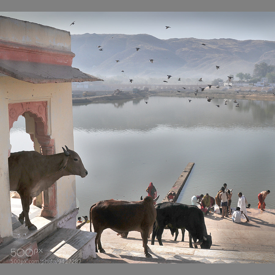 Photograph Early Morning in Pushkar by Rosário Marques on 500px