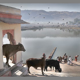 Early Morning in Pushkar by Rosário Marques (RosarioMarques)) on 500px.com