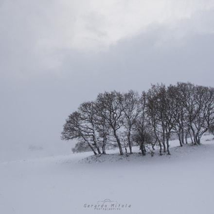 Alberi nella neve