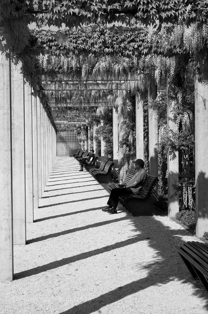 Photograph Lines by Olga Bushkova on 500px